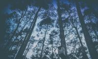 Noc Sów we Wdeckim Parku Krajobrazowym, fot. Daniel Pach