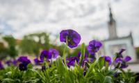Wiosna na Kujawach i Pomorzu, fot. Łukasz Piecyk