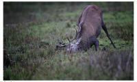 Fauna Krajeńskiego parku krajobrazowego, fot. Daniel Pach