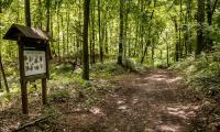 Rezerwat Szumny Zdrój na terenie Górznieńsko-Lidzbarskiego Parku Krajobrazowego, fot. Andrzej Goiński/UMWKP