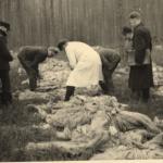 Ekshumacje w Piaśnicy, IPN